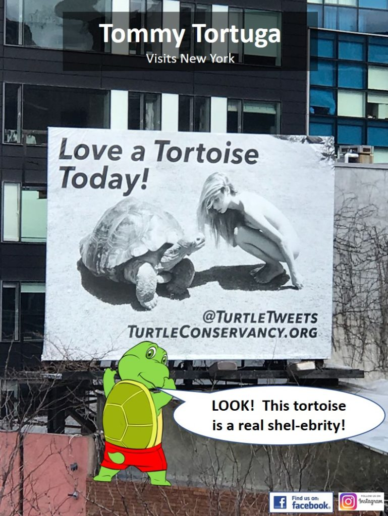 Tortoise Billboard - Look